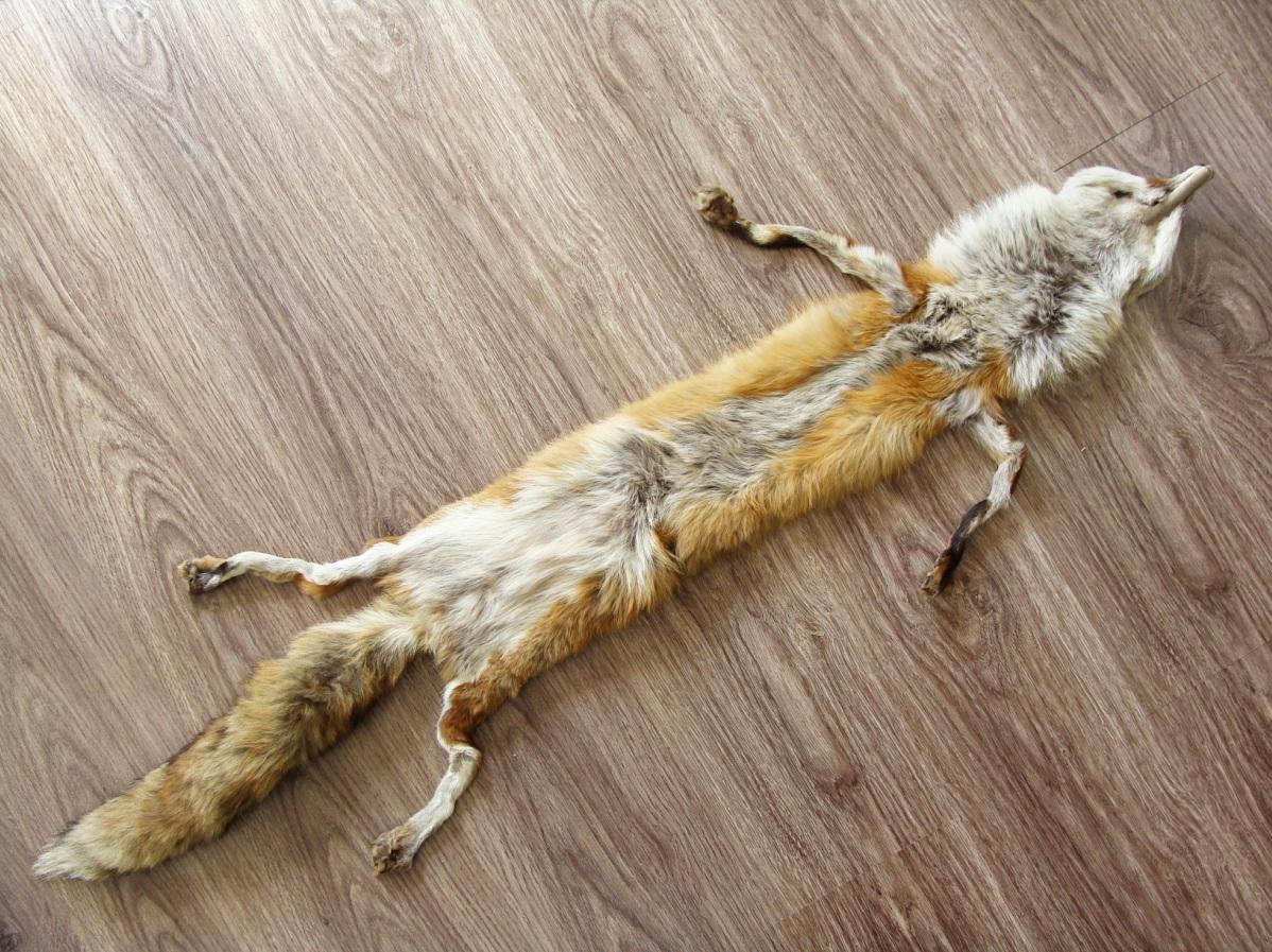 پوست روباه