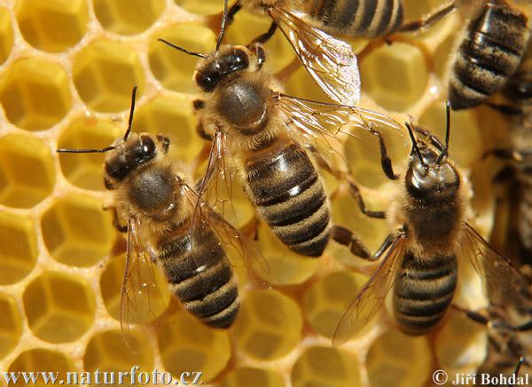 زنبورها هم در انتظار کمک دولت فدرال هستند
