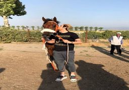سردار آزمون اسب 5 میلیارد تومانی خرید !