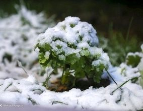 بارش برف پاییزی - زنجان و تبریز
