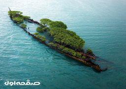 کشتی غرق شده بریتانیایی که تبدیل به باغچه شد+عکس