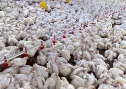 هر کیلو مرغ در خرده فروشی ها چند تومان است؟