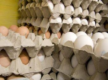 قیمت تخم مرغ اعلام شد/صادرات تخم مرغ متوقف شد
