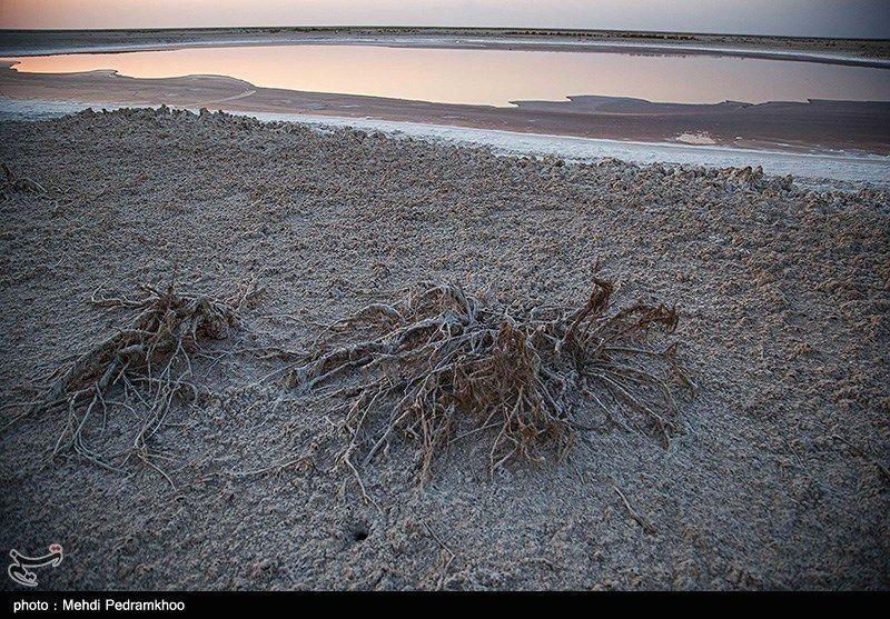 تصاویر: فاجعه زیست محیطی در تالاب شادگان