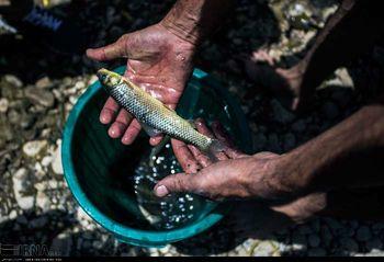 با خواص بی نظیر ماهی قزل آلا آشنا شوید