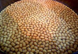 کارگاه پخت زولبیا و بامیه در همدان