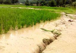 خسارت سیل به بخش کشاورزی اعلام شد: ۴۶ هزار میلیارد ریال
