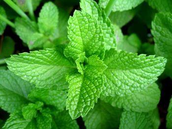 گیاهی که سلامتی شما را تضمین میکند