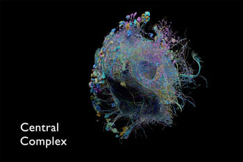 انتشار بزرگترین نقشه اتصالات مغزی