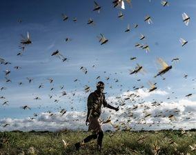 تصاویر هجوم ملخها به کشورهای مختلف