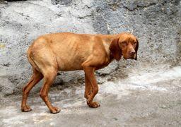 حکم جالب دادگاه برای یک سگآزار؛ برنامه آموزشی فشرده به مدت شش ماه