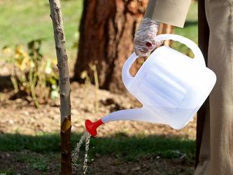 تصاویر مقاممعظمرهبری حین کاشتن دو نهال میوه در روز درختکاری