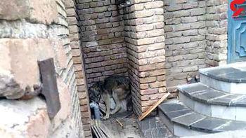 مشاهده ۶ گرگ در خیابان وحشت به جان مردم انداخت+عکس