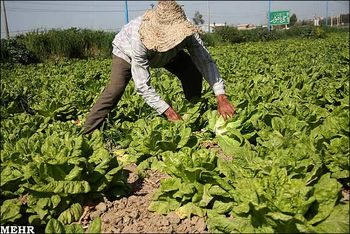 گرانی سرسام آور کود و سموم کشاورزی