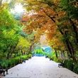 کدام پارکهای تهران اجازه بازگشایی نیافتند؟