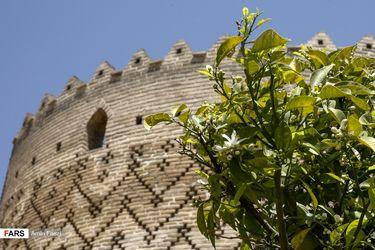 بوی بهار نارنج در اردیبهشت شیراز