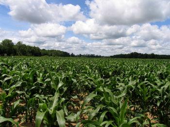 سهم 80  درصدی کشاورزی در  تولید اکسید نیتروژن