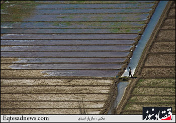 کسری 70 میلیارد تومانی ترویج کشاورزی