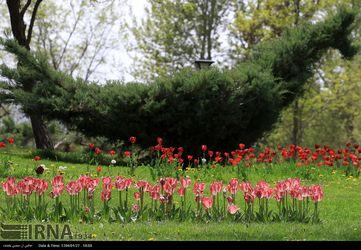 جشنواره گل ها در مشهد