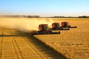 کاهش تولید گندم و کلزا در آلمان