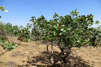 ایران در رتبه 48 کشورهای تولیدکننده ارگانیک