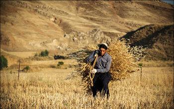 ۸۰ درصد کشاورزان ایرانی بی سواد یا کم سوادند