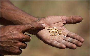 افزایش ۱۵ برابری خرید تضمینی گندم در استان تهران