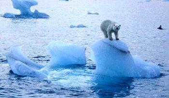 هشدار جدی زیست محیطی در مورد یخ های قطب شمال