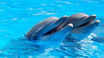 عملیاتی متفاوت با کمک دلفین های نظامی ارتش آمریکا +عکس