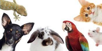 بلایی که مواد استریل کننده بر حیوانات خانگی می آورد