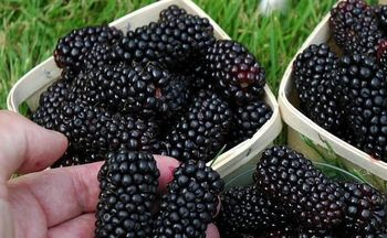 شکاف 5 برابری میوه نوبرانه درتره بار و بازار