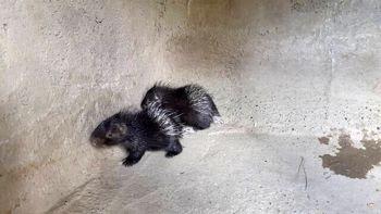 کدام جانور از باغ وحش تهران فرار کرده است؟