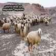قیمت خرید دام زنده شهرداری برای عید قربان از مرکز عرضه تهران