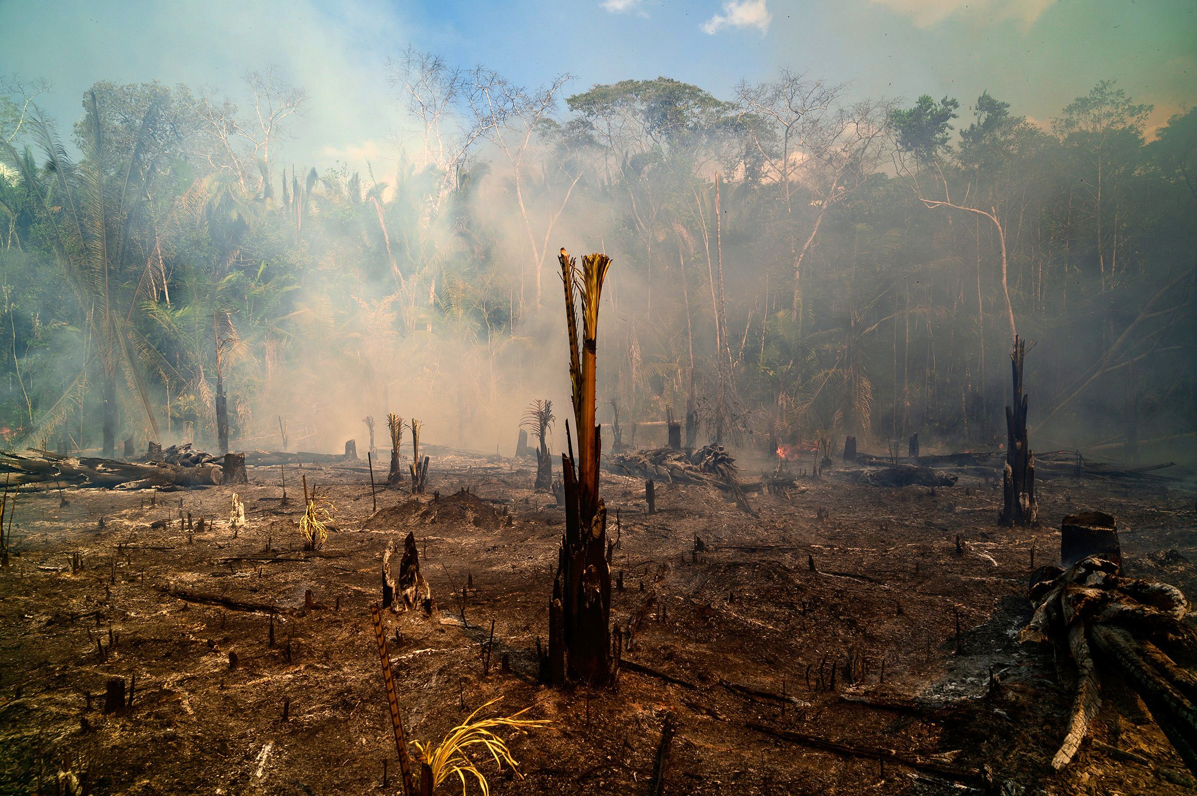 Ashen trees near Realidade, Brazil, on Aug. 26. August was burning season in the Amazon, where ranchers use the dry weather to prepare land for crops and pasture.
