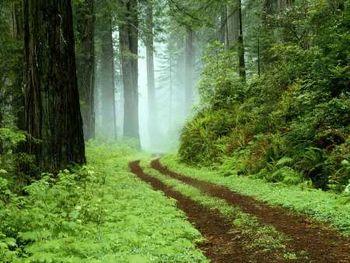 گردشگران گمشده در جنگل بلیران آملنجات یافتند