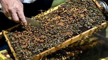 قرنطینه موجب افزایش بیسابقه تولید عسل شد