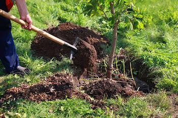 تلاش یوتیوبرها برای کاشت 20 میلیون درخت