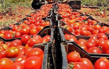 بازگشت محموله های گوجه فرنگی از عراق به دلیل خرابی