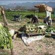 مصوبه افزایش ۴۰۰ تا ۷۰۰ درصدی قیمت کود کشاورزی ابلاغ شد+سند
