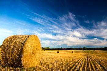 قیمت زمین کشاورزی در امریکا