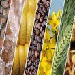 با وجود مازاد محصولات کشاورزی، بخش خصوصی باید وارد کار شود