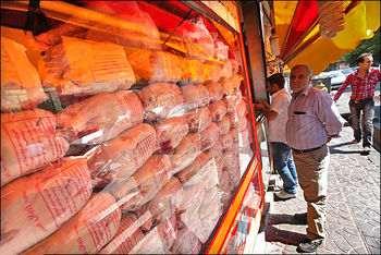 دولت با مرغهای جمعآوری شده از بازار چه میکند؟
