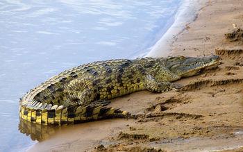 دختر ۱۵ ساله تمساح پرورش میدهد+ تصاویر