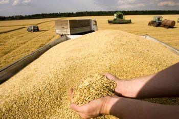 کاشت بیش از 770 میلیون بوشل غلات در ده ایالت آمریکا