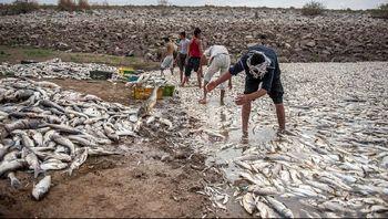 تراکم، بلای جان ماهی های فشافویه