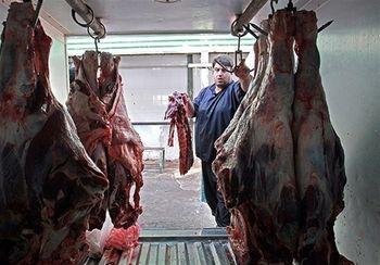 تداوم گرانفروشی گوشت قرمز
