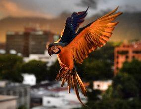 برترین عکسهای خبری حیوانات به انتخاب مجله آتلانتیک