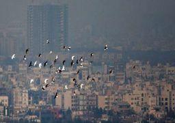 کدام شهر ایران امروز رکورد آلودگی هوا را به خود اختصاص داد؟نقشه