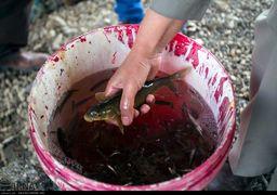 ماهی قرمز شب عید ناقل بیماری و ویروس کرونا است؟