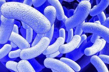چند کیلو میکروب در بدن شما زندگی میکند؟